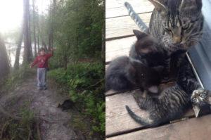 キャンプを楽しむ親子と偶然出会った猫。ご飯を与えると信頼したのか、子猫を紹介しそのまま家族へ。