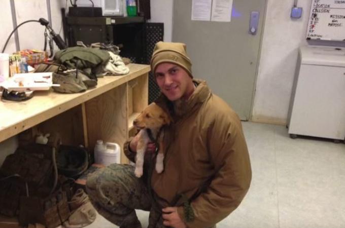 戦地で出会った子犬を任期が終えてアメリカに連れて帰ろうとした男性。そして、相棒と再会の瞬間に涙。