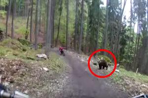 サイクリングをしている男性をクマが全速力で追いかける動画が公開から数日で再生数850万回を超える!