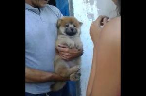 可愛い子犬を抱こうとする女性。しかしそれを全力で嫌がる子犬。微笑ましい映像を撮影するはずが残念な結果に!