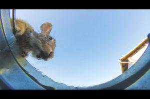 砂漠に水の張ったバケツを置いて定点カメラで観察。すると、次々に現れる動物たち。その様子がこちら。