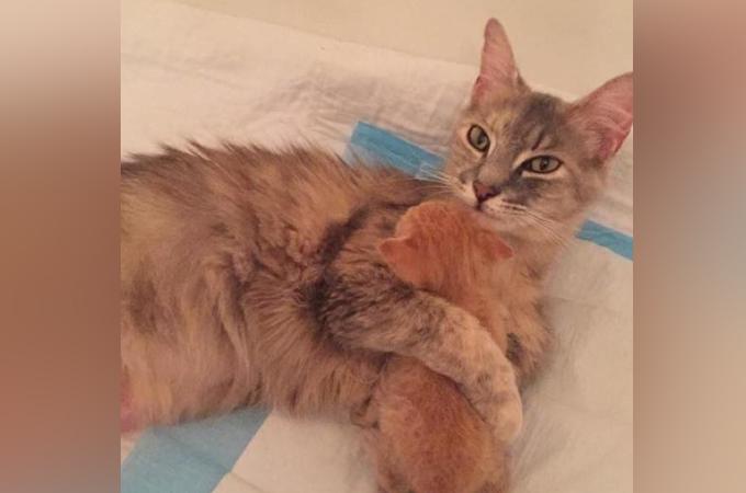 我が子を病気で亡くした母猫が孤児の子猫との出会いで元気を取り戻し、深い愛を注ぎ込む。