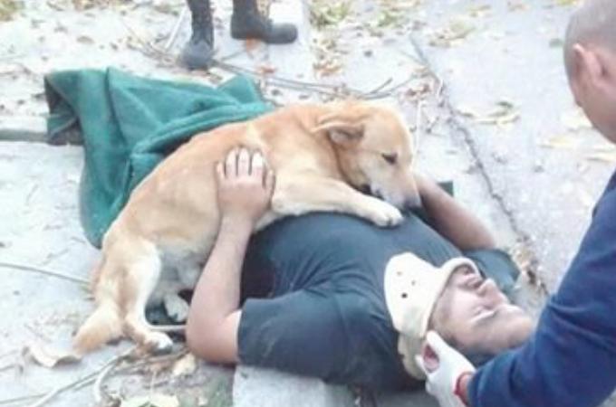 木から落ち頭を打ち付けた飼い主さん。心配そうに励まし、搬送される最後の最後まで寄り添った愛犬の姿に誰もが感動。