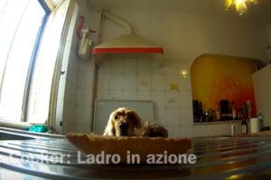 飼い主さんの留守を見計らってテーブルの上に置いてあるおやつを食べようとする犬。その本気の姿がこちら!