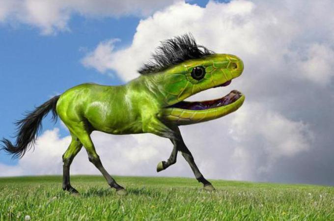 2つの動物写真を組み合わせた合成アート。そのなんとも言えない奇妙な感じがこちら!