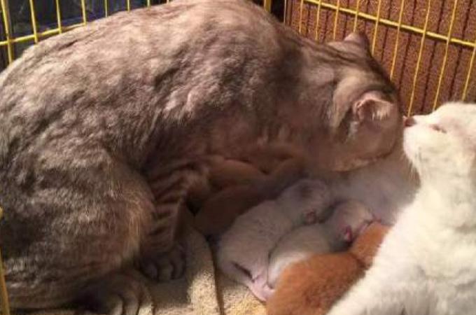 出産を頑張ったママ猫を労るパパ猫の姿に思わずほっこり!