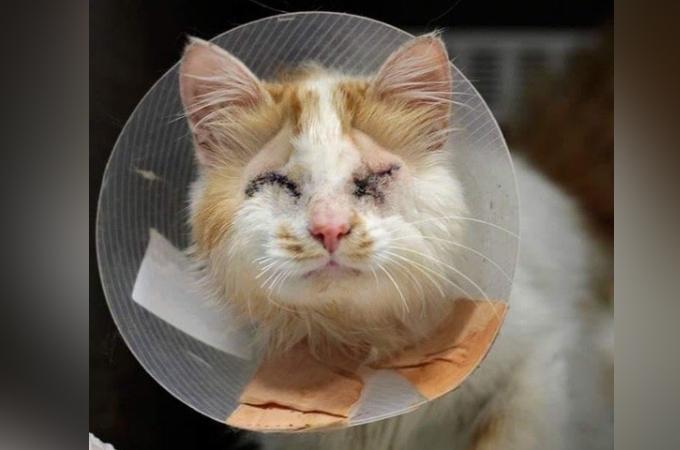 両目を失い、飼い主に捨てられた猫。絶望の淵にいた猫を救ったのは心優しい夫妻と1匹の猫だった。