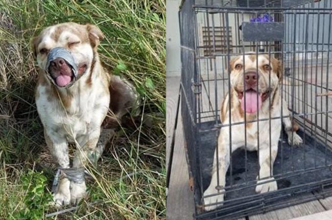 口と前足を縛られた犬を発見した男性。すぐに自由にしてあげ施設へと送り届けると、笑顔を見せるその犬に胸が傷む