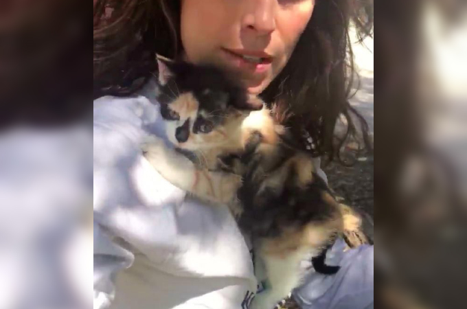 鳥かごの中に閉じ込められ子猫。女性に抱かれ「助けて」という表情で必死にしがみつく姿に胸が苦しくなる
