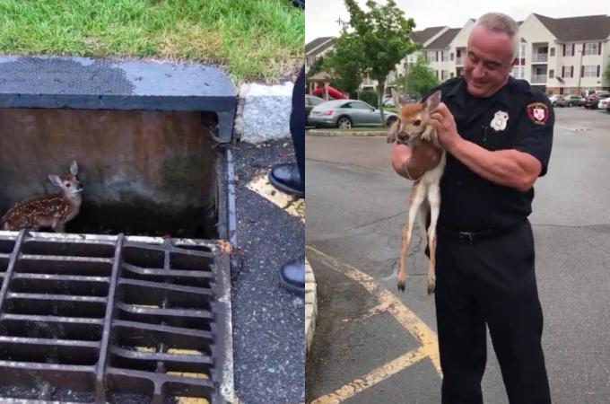 住民の通報によって駆けつけると、そこには排水溝に落ちた子鹿が。その可愛さのあまり警察官も笑顔になる。