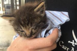 病気を患い目も開かないボロボロの状態の子猫。命の危険もあった子猫が本来の姿を取り戻すまで。