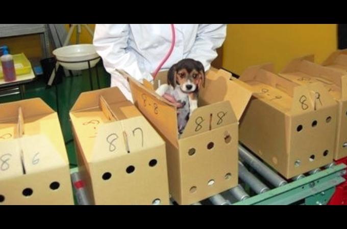 子犬・子猫が箱に入れられ、流通の段階で落とす命と、その死亡の原因に胸が傷む