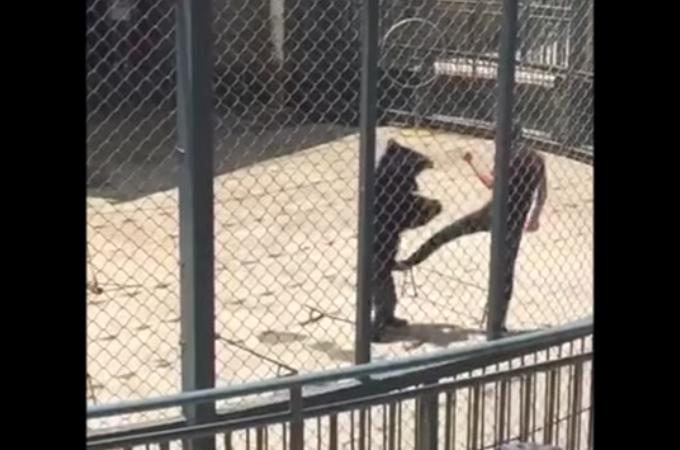 中国のサーカス団で動物虐待。演技をミスしたクマに殴る蹴るの暴行を加え避難が殺到。サーカス団は休演することに。