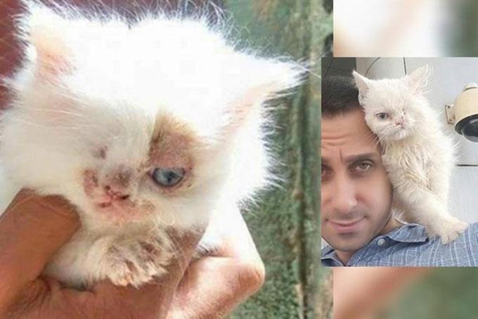 カイロで保護された片目の子猫が飼い主を求め海を渡りアメリカへと旅立つ