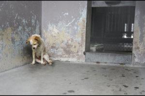 人生のすべてを諦めたかのように避難所の隅に身を寄せる犬が見つかる