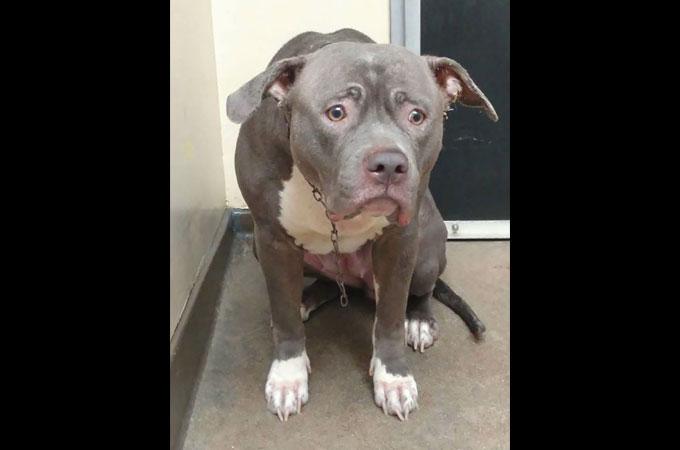 理由もわからないままシェルターに捨てられた犬が見せた悲しみの表情