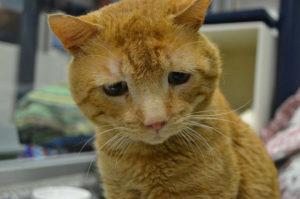 難病と痛みから世界で一番悲しい表情を浮かべる猫が笑顔に変わる