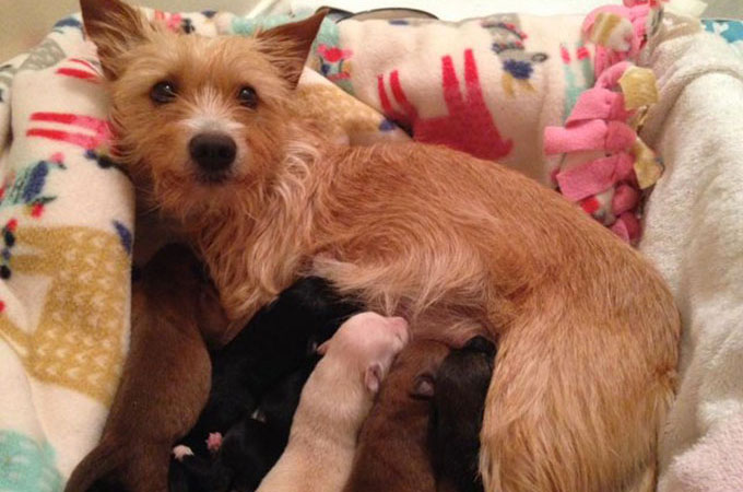 我が子を失い強暴になった母犬を救ったのは車窓から投げ捨てられた孤児たち