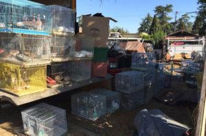 放置されたトラックの荷台からおよそ1000匹の動物たちが見つかる
