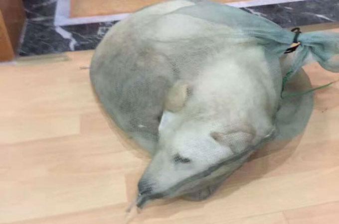 中国の路上で犬肉用として生きたまま袋詰めにされ売られていた犬
