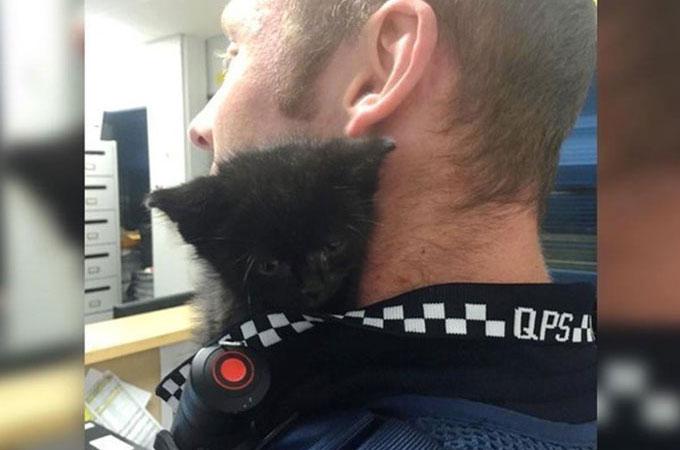 警察官によって保護された黒猫の赤ちゃん 職員の肩に乗り仕事のサポート