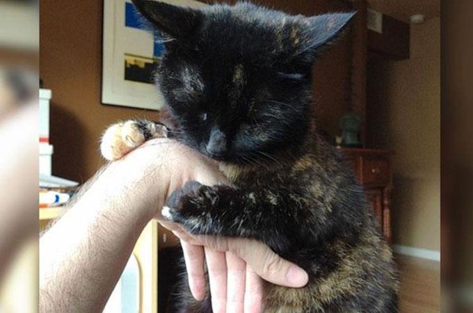 保護されたホームレス猫はエイズウイルス感染症と向き合い飼い主さんと幸せな日々を送る