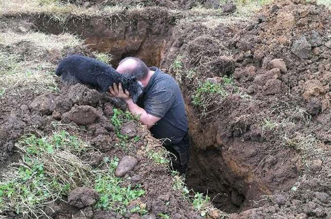排水管の中へ閉じ込められ19時間を過ごした犬が無事救出されるまで