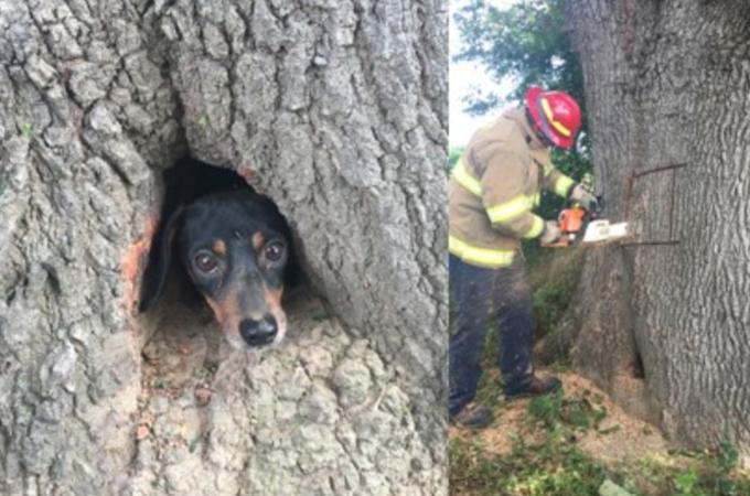 木の中に入って出られなくなってしまった犬。その光景に救助隊も驚きながらも、無事に救出される!