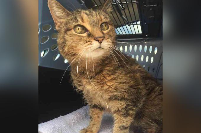 20歳になり「もう面倒が見れない」という理由で飼い主に捨てられた老猫が送る、その後シェルターでの暮らし。