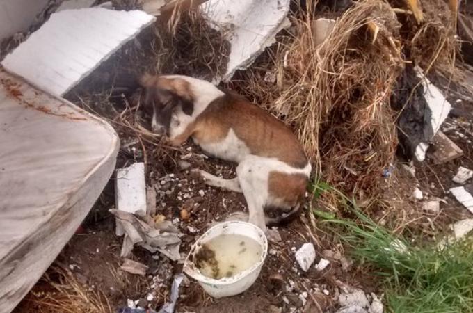 ゴミ山に捨てられた病気の犬。思いもよらぬ偶然が重なり、奇跡的に救出される。