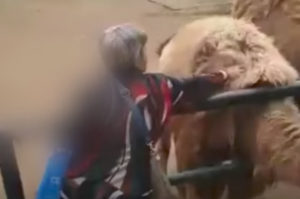 中国の動物園でラクダの毛を刈りバッグに詰め込んだ女に非難が殺到。そして、その理由とは