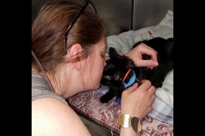 火災によって失ったと思われた猫。火事の2ヶ月後に訪れた時に愛犬が床下にいる猫を発見。救出される