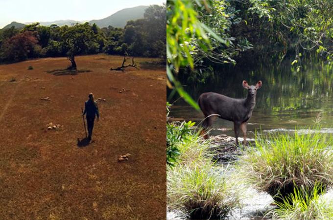 インドの荒れた熱帯雨林を購入した夫婦。それから26年たったその光景に誰もが驚く。