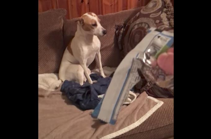 ある日、食べ物が何者かによって食べられた飼い主さん!愛犬にそれを尋ねた時にみせた反応がこちら!