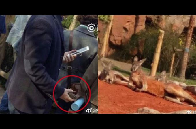 中国の動物園で寝ているカンガルーに向かって「ダラダラせずに飛び跳ねろ!」と石を投げた男が大炎上。