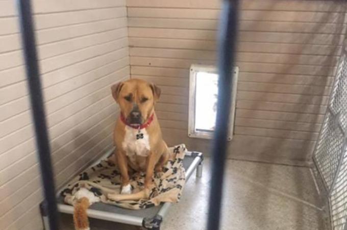 人間が大好きで人懐っこく、愛らしい犬が3年間も施設で暮らす理由に切なくなる。その理由とは。