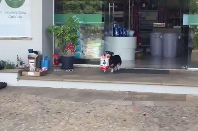 ブラジルのある街で有名なワンコ。自分で買い物をして、商品を家に持ち帰る姿が可愛すぎると話題に!