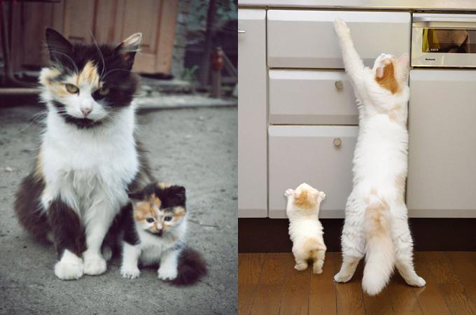 【画像】同じポーズをしているキュートな動物の親子の画像20枚