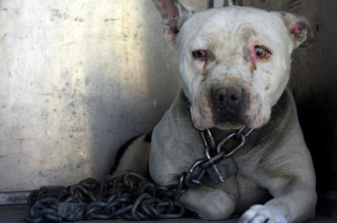 炎天下の中、重い鎖と南京錠で繋がれ放置状態にされていた犬たち。体と心に負ったダメージに胸が痛む。