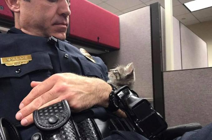 迷子の子猫を保護した警察官。子猫の熱烈な視線にやられてしまいそのまま家族となる!