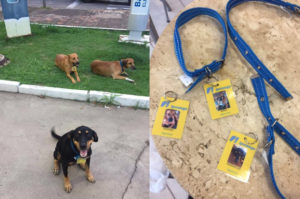 ホームレスだった3匹の犬。居着いていたガソリンスタンドのオーナーが替わった事がきっかけで人生が変わる!