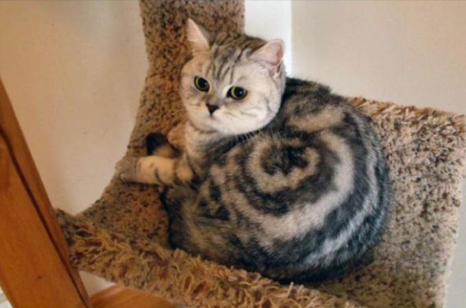 【画像】猫好き必見!偶然撮れてしまった不思議な猫の写真10選