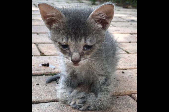 障害を抱え脚をひっくり返した状態でしか歩くことが出来ない子猫の未来は