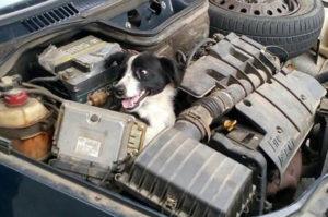 車が故障!原因を確かめるためボンネットを開けると中から出て来たのは?