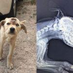 頭に大きな穴があいた野良犬 その傷を負った原因があまりに残酷すぎる