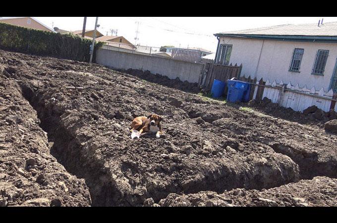 建設現場に捨てられ心を閉ざしてしまった犬が再び人に笑顔を見せるまで