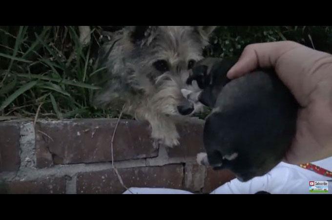 出産したばかりのホームレス犬が多くのあたたかい人の手によって笑顔になる
