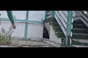 廃校となった建物の下に住み着いた2匹のホームレス犬 保護され9匹の元気な赤ちゃんを出産