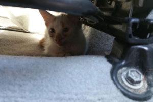 乾燥した食べ物の汚れと、猫同士のケンカで目に酷いケガを負った子猫