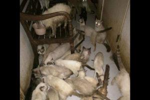 アパートの一室に94匹の猫 その多くが病気にかかり中には死んでいる猫も